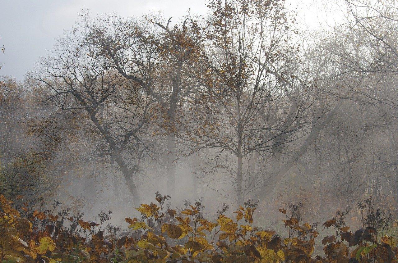 На этой неделе в Крыму ожидается похолодание, ветер и ночные заморозки
