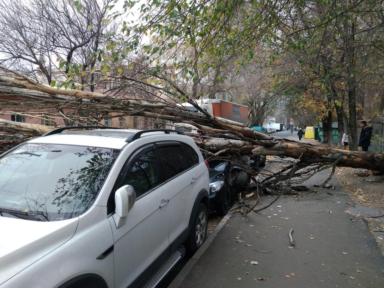 В Крыму сильный ветер сносит жестяные листы и валит деревья на машины