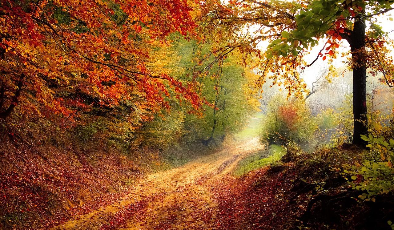 Неделя в Крыму начнется с тепла: прогноз погоды на 4-6 ноября