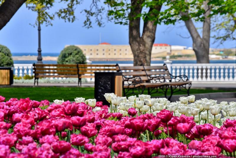 В Севастополе высадят более 400 тысяч весенних цветов