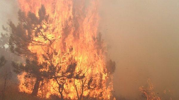 В Симферопольском районе введен режим ЧС из-за лесного пожара