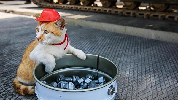Кот Мостик вошел в ТОП самых медийных котиков десятилетия