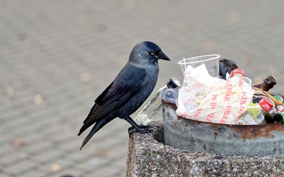 Губернаторы будут лично контролировать вывоз мусора в новогодние праздники