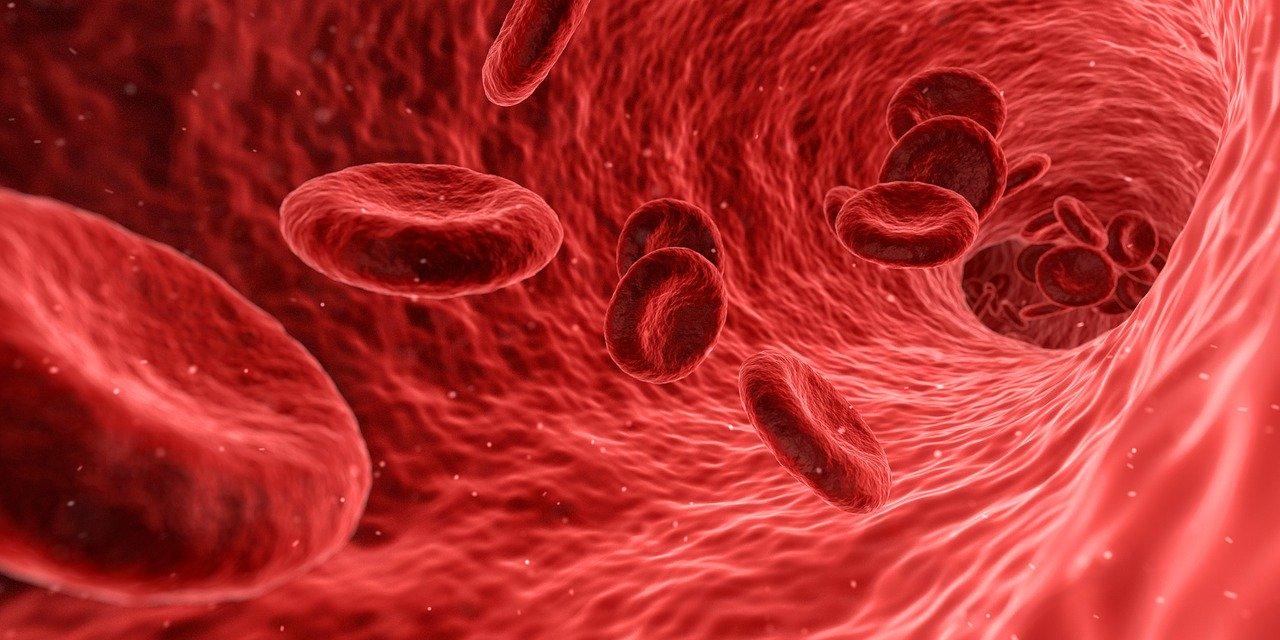 Названы главные враги кровеносных сосудов