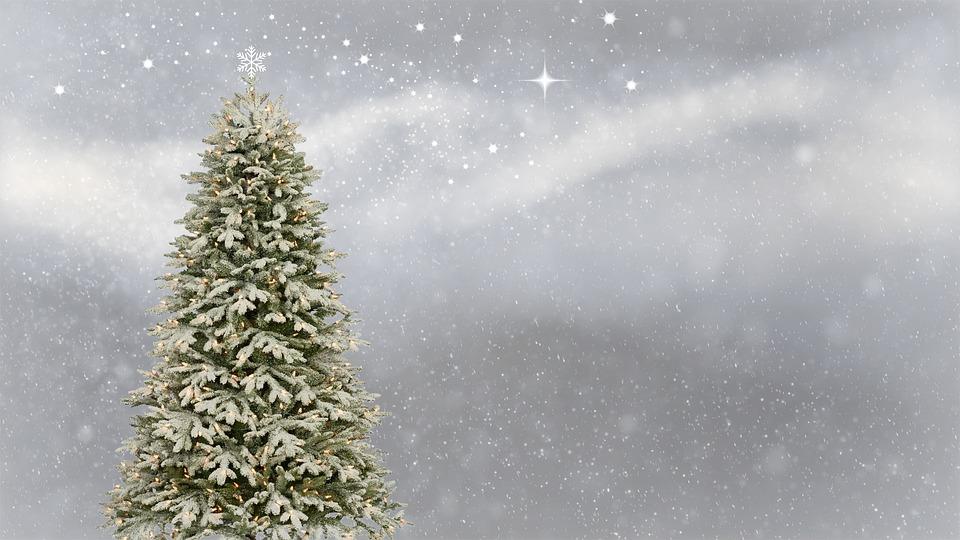Как выбрать новогоднюю елку: советы Роскачества