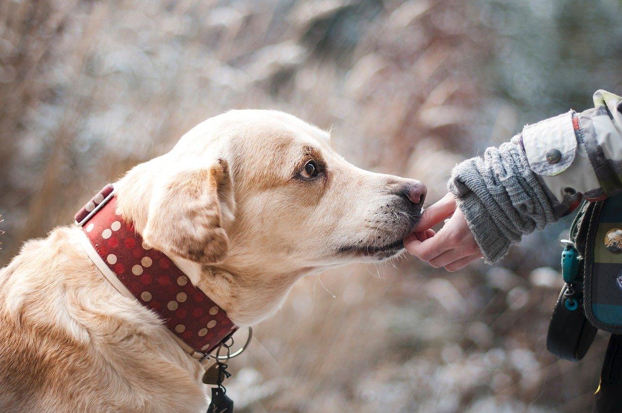 Названа смертельно опасная болезнь, передающаяся через собак