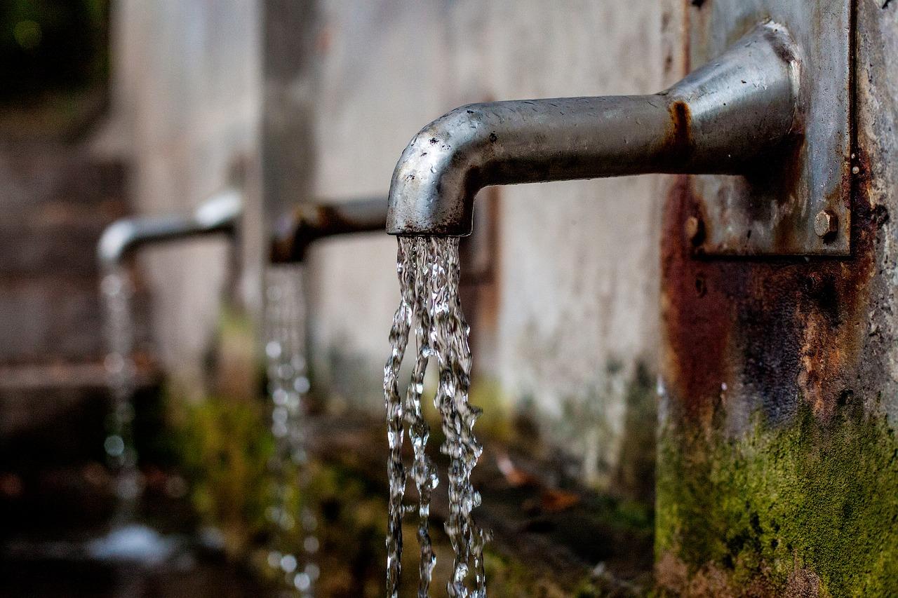 Фиолент просит воды