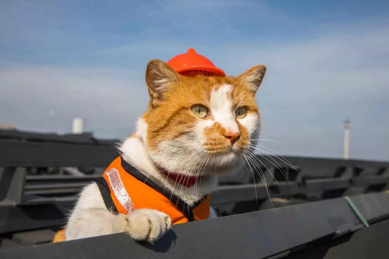 Что будет с котом Мостиком после завершения строительства Крымского моста