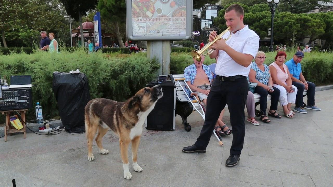 Поющего на набережной Ялты пса Мухтара забрала служба отлова