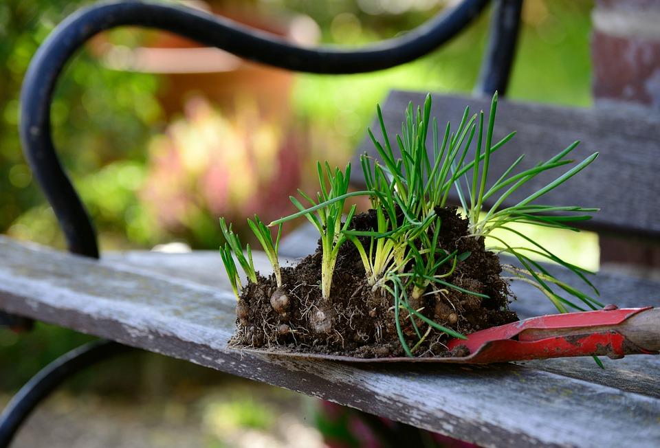 Вандалы в Севастополе похитили 200 саженцев растений