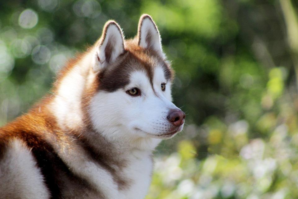Названы самые популярные у россиян породы собак в 2019 году