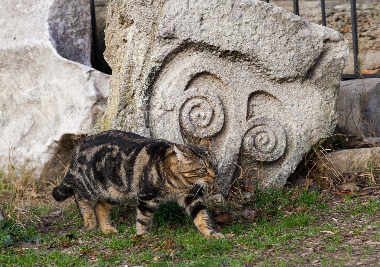 Ветеринарные карточки, собственные имена и давняя дружба: что известно о котах Херсонеса