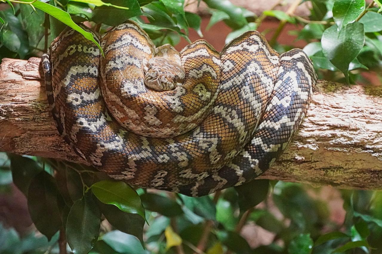 Смертельный коронавирус в Китай могли принести змеи — ученые