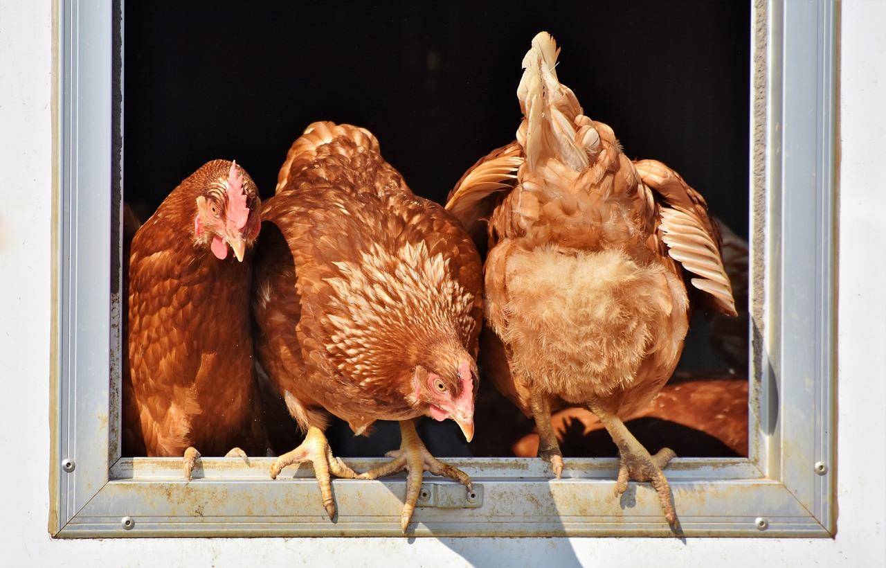 На Украине зафиксировали вспышку птичьего гриппа