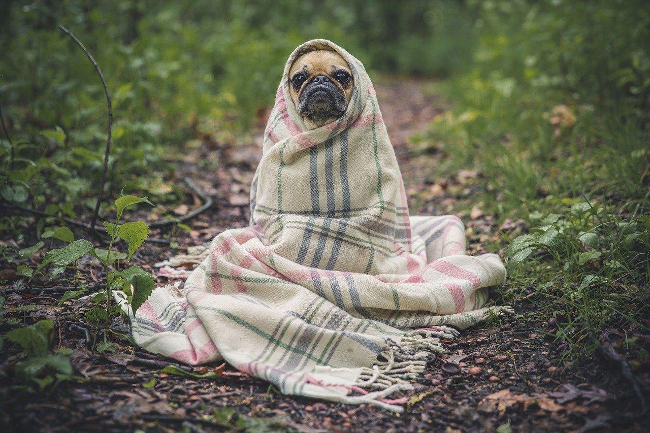 Ученые выяснили, что собака в доме может спасти от шизофрении