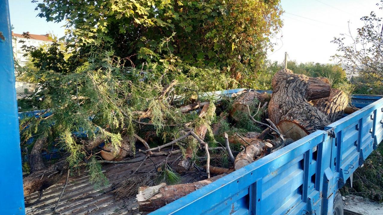 Из-за срубленных возле ТК «Океан» деревьев возбуждено уголовное дело