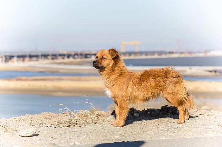 Собак с Крымского моста можно забрать домой