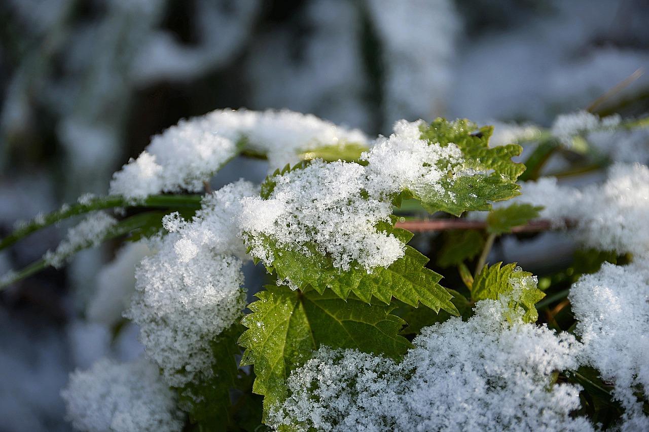 Атмосферные фронты принесут в Крым снег – прогноз погоды