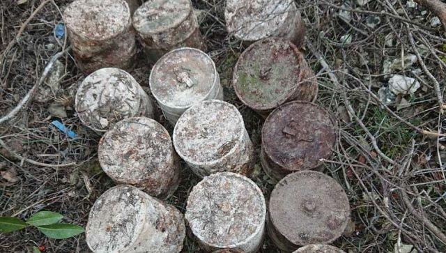 В Севастополе грибники случайно нашли в лесу два десятка боевых гранат