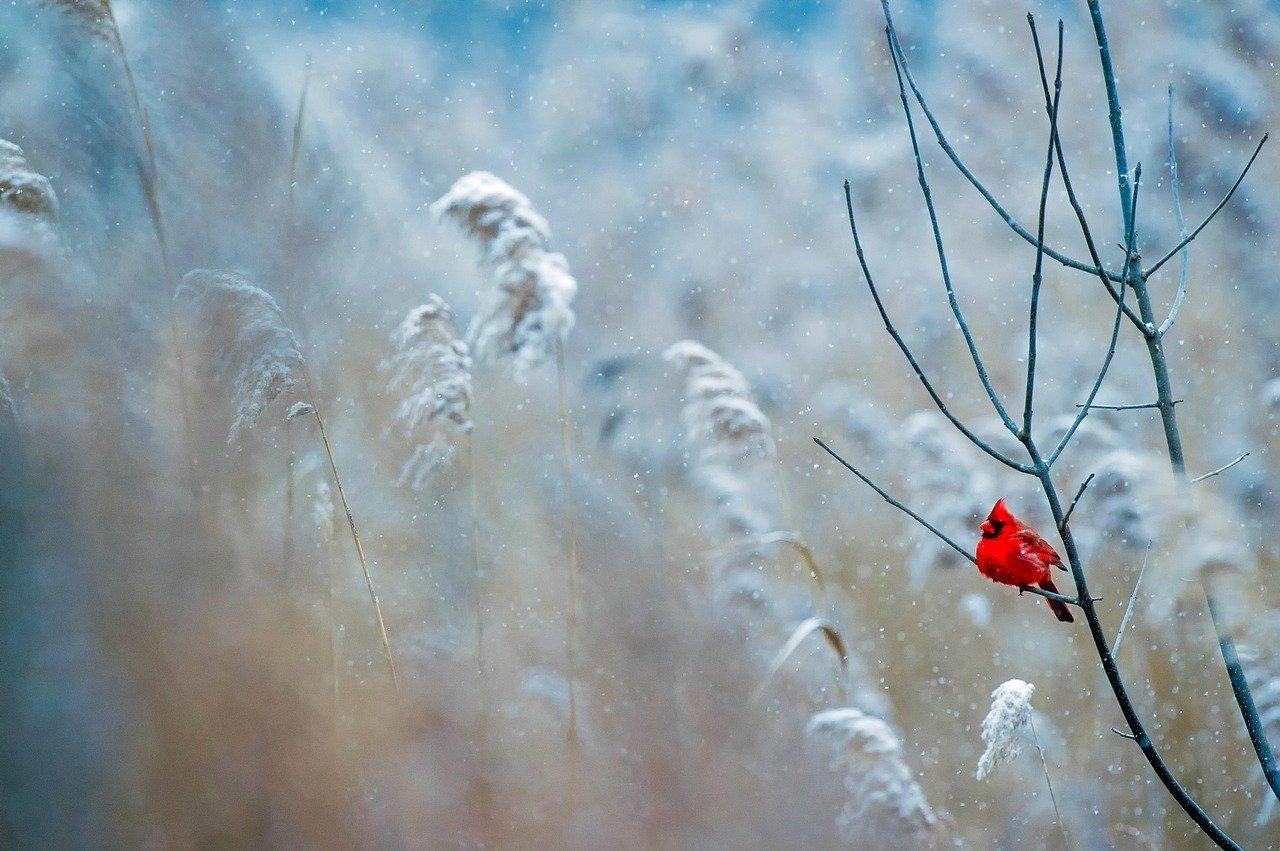 На выходных в Крыму похолодает до 10 градусов мороза