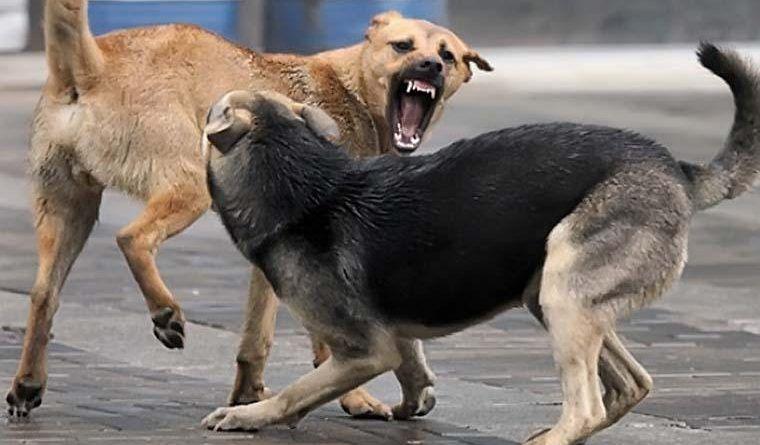 Разорвали ногу: в Симферополе на мужчину напала стая бродячих собак