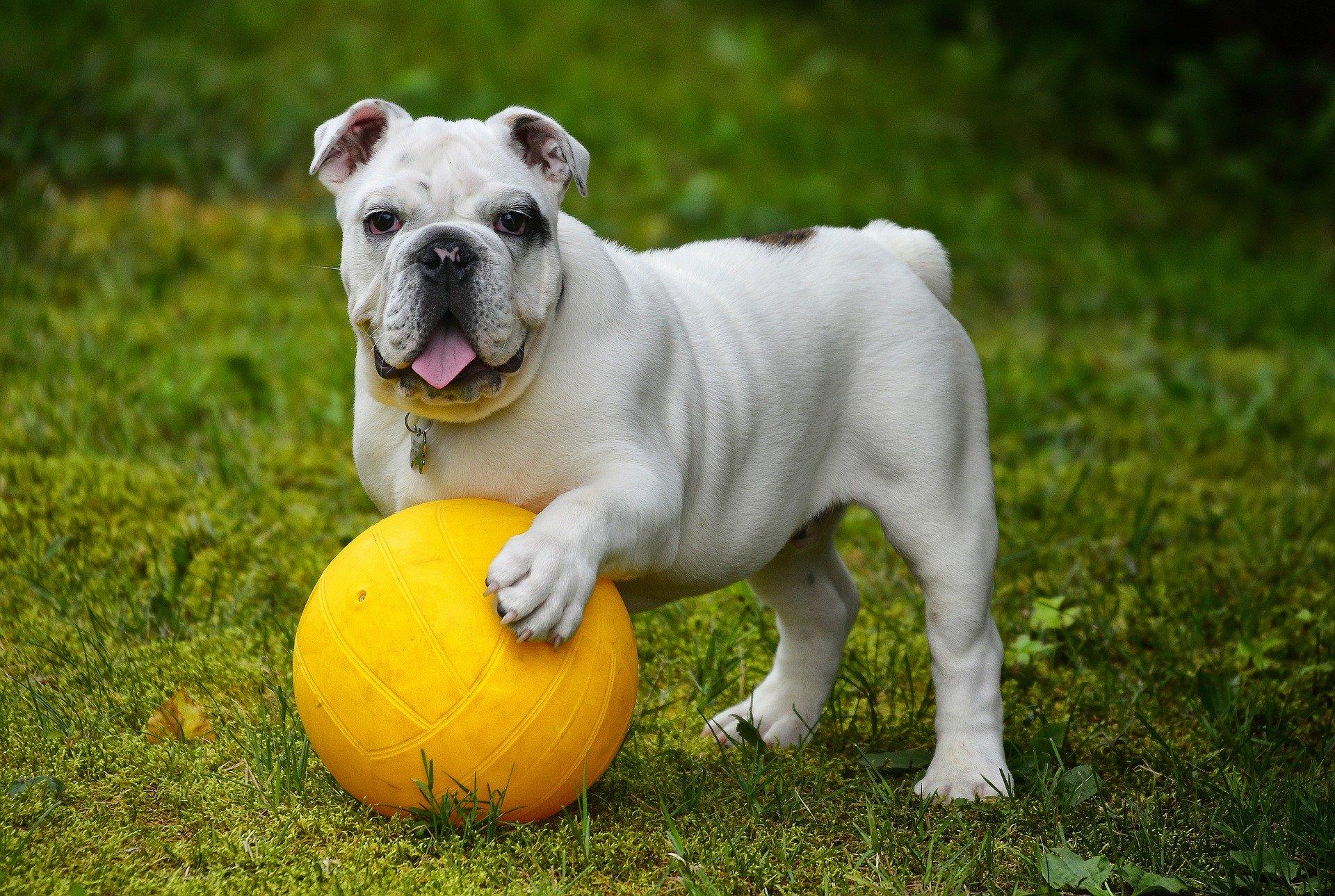 Во всех районах Севастополя построят площадки для выгула собак