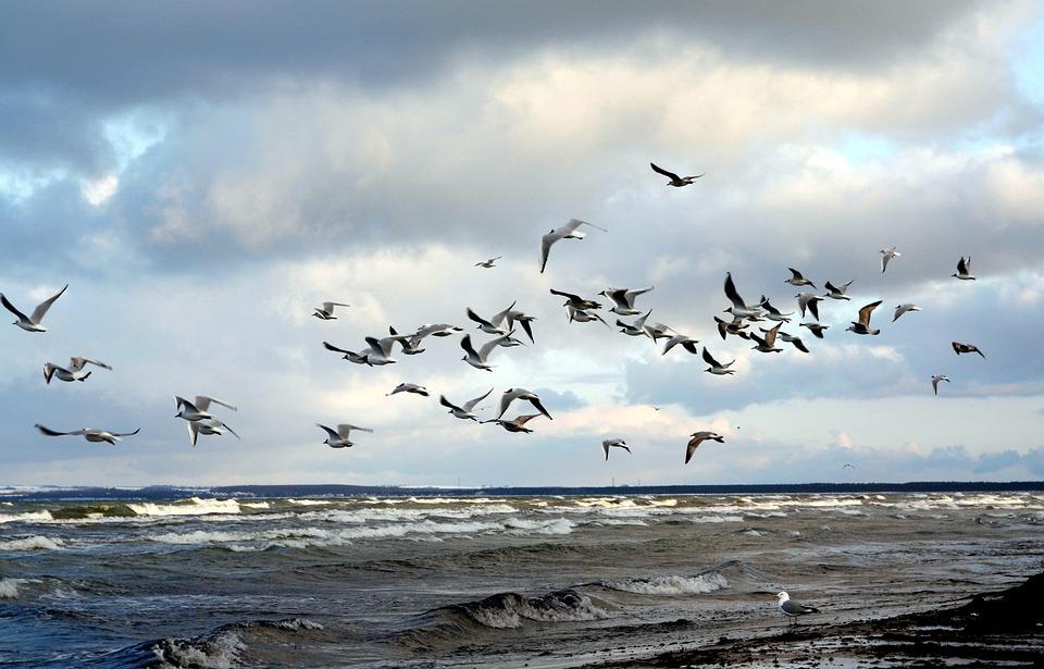 В Крыму до конца месяца будет ветрено, дождливо, но тепло — прогноз погоды