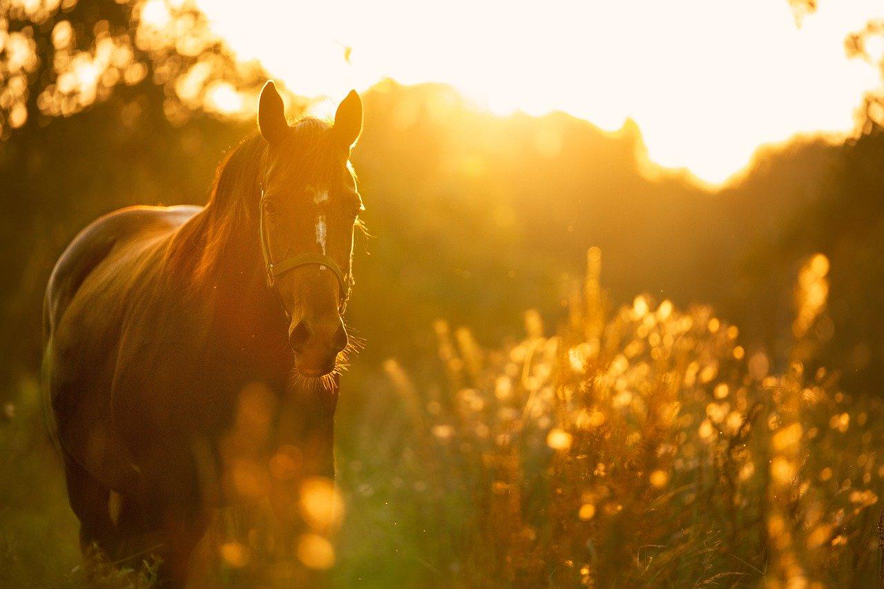 На трассе в Крыму микроавтобус насмерть сбил лошадь
