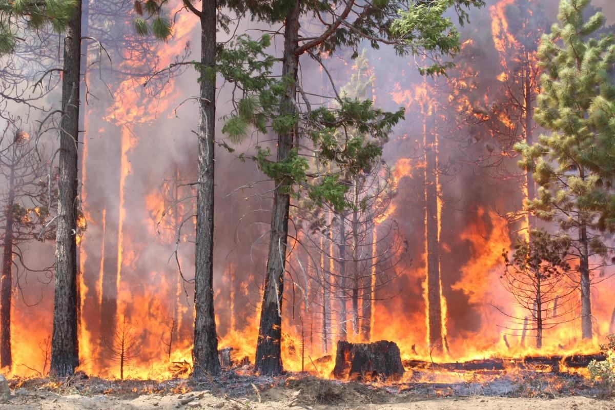 В Крыму и Севастополе объявили пожароопасный сезон