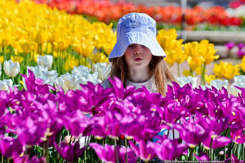 Когда в этом году пройдет парад тюльпанов в Никитском ботсаду