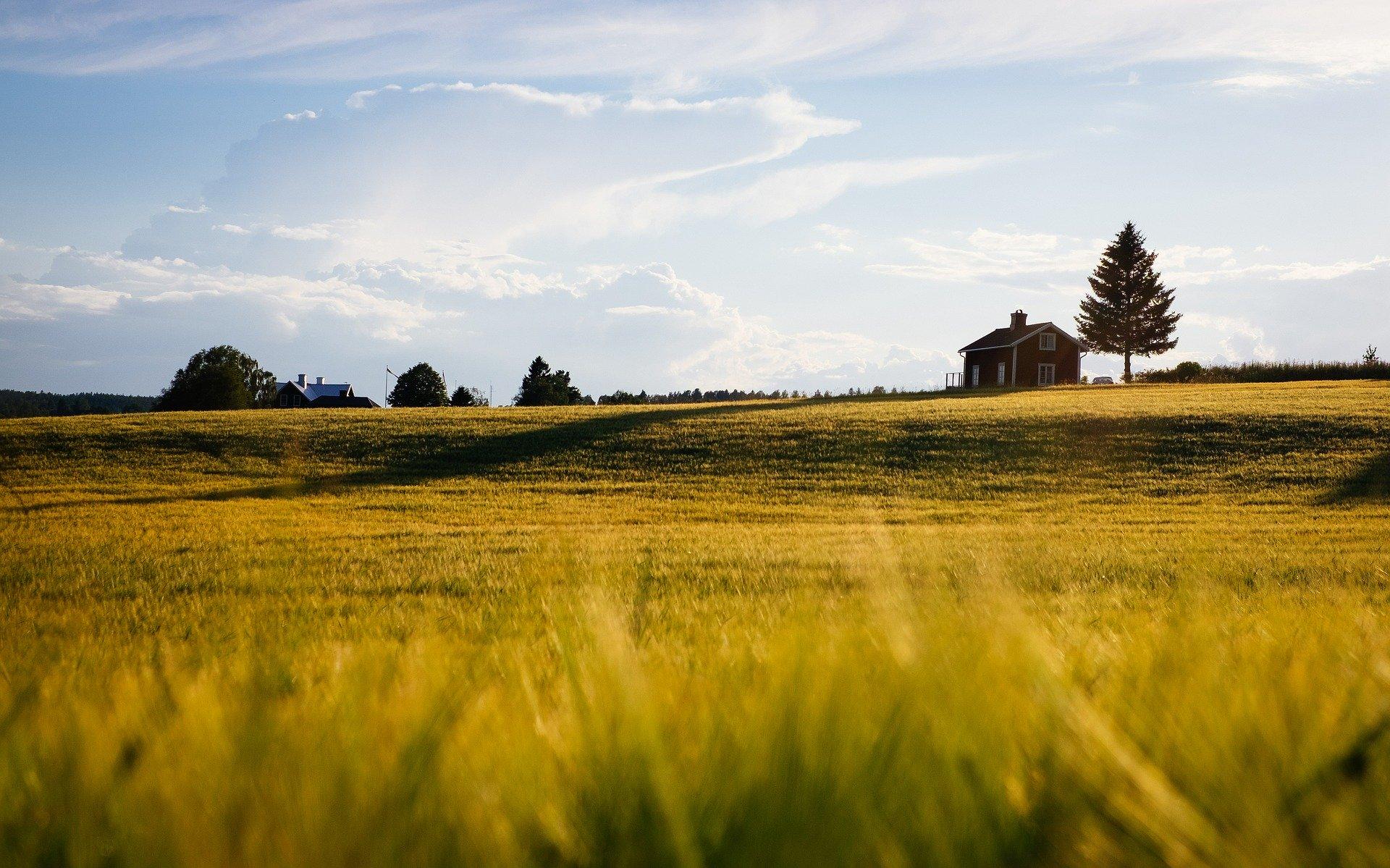 У севастопольцев выкупят 21 земельный участок для строительства «Тавриды»