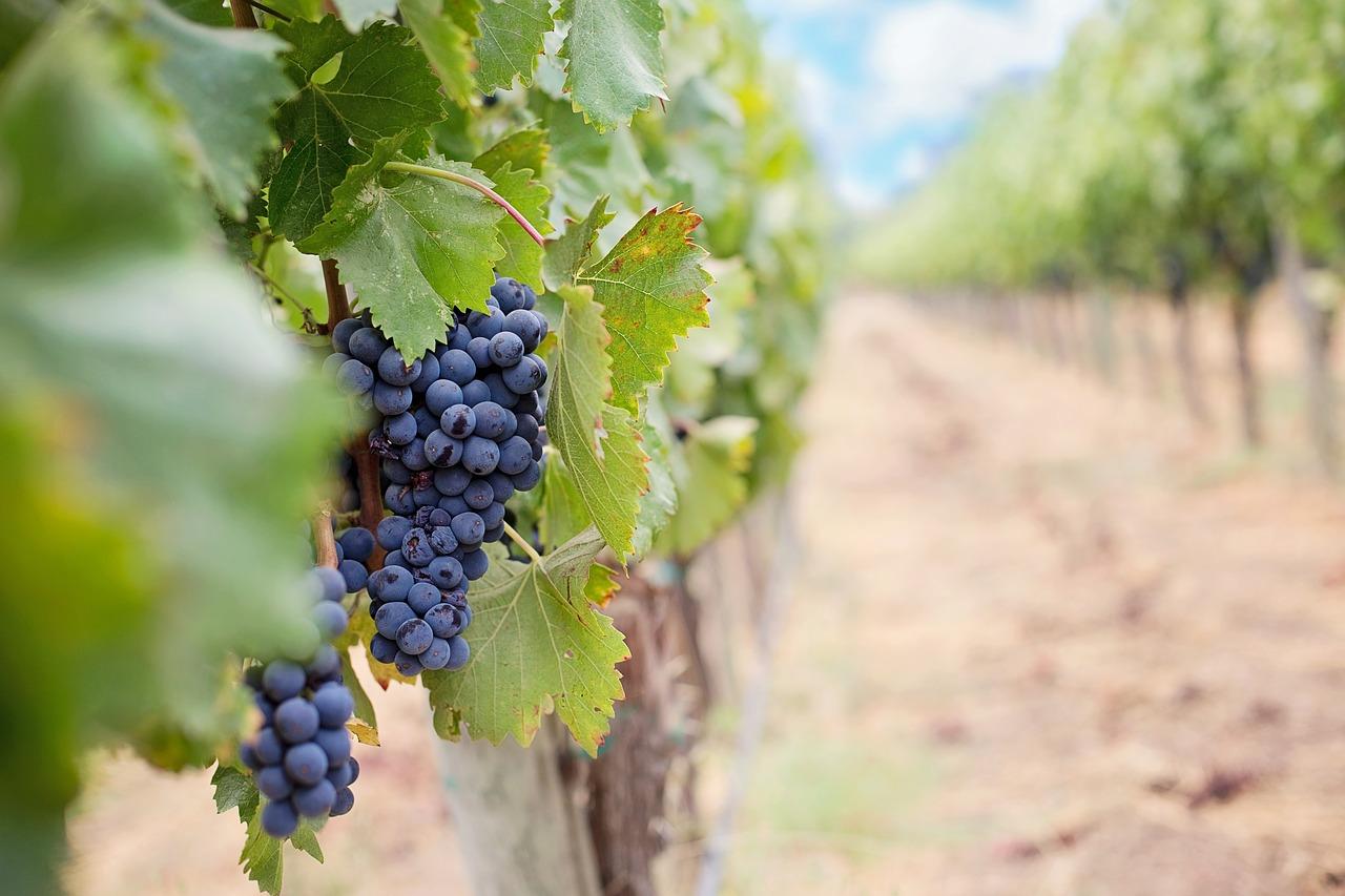 Пропавшую в Крыму 14-летнюю девочку нашли на виноградниках в компании мужчины