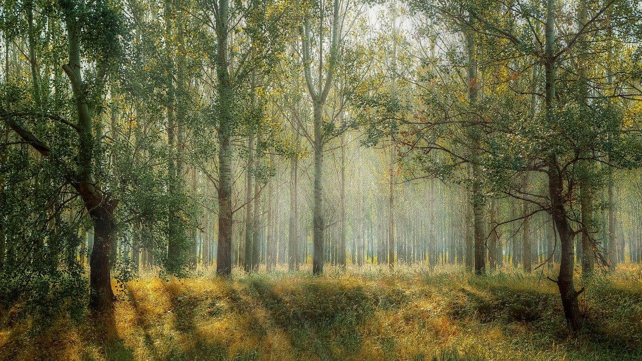 На горе Гасфорта в Севастополе высадят «Русский лес»