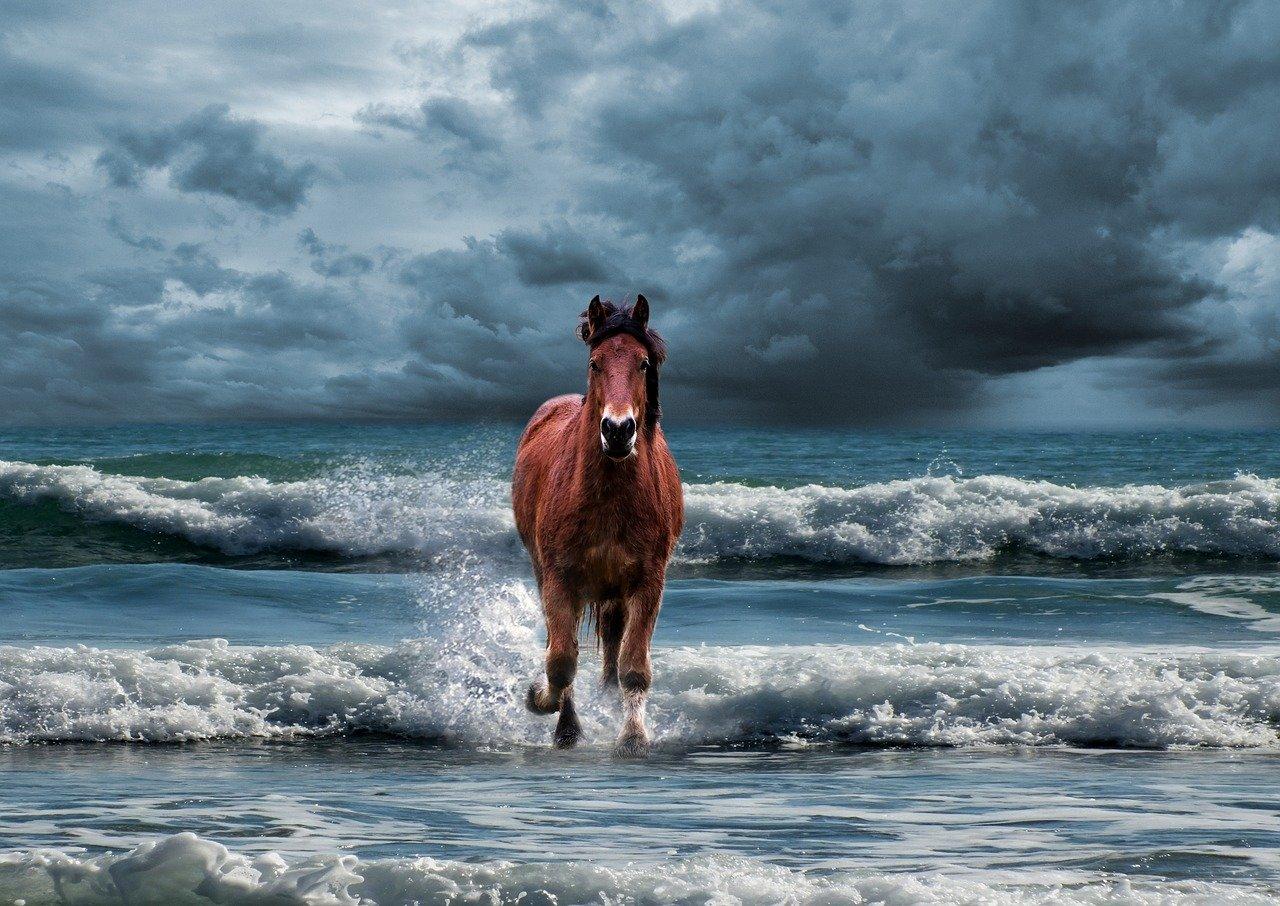 В Севастополе ищут сбежавшего коня