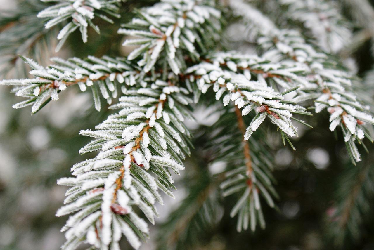 В Крыму сохранятся ночные заморозки (прогноз погоды на 19 – 21 марта)