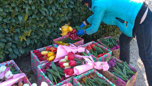 В Никитском ботсаду срезают тюльпаны на подарки