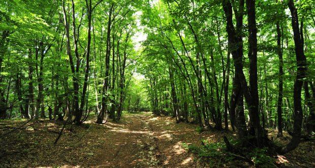 Запрет на посещение лесов в Севастополе продлили до конца апреля