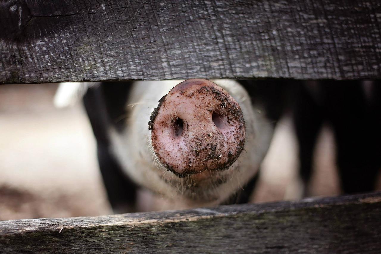 В Севастополе возле кладбища обнаружена свалка свиных шкур