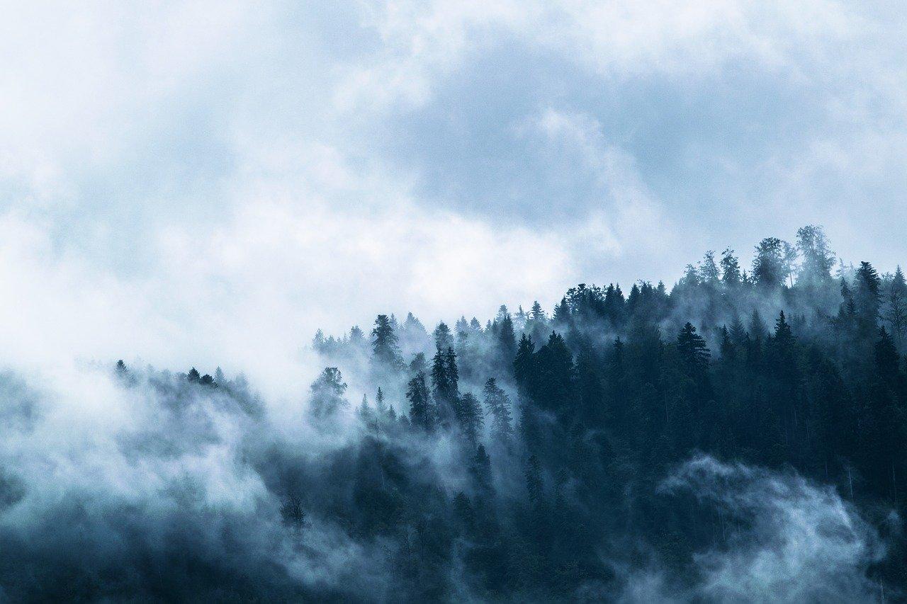За посещение леса в Ялте грозит крупный штраф