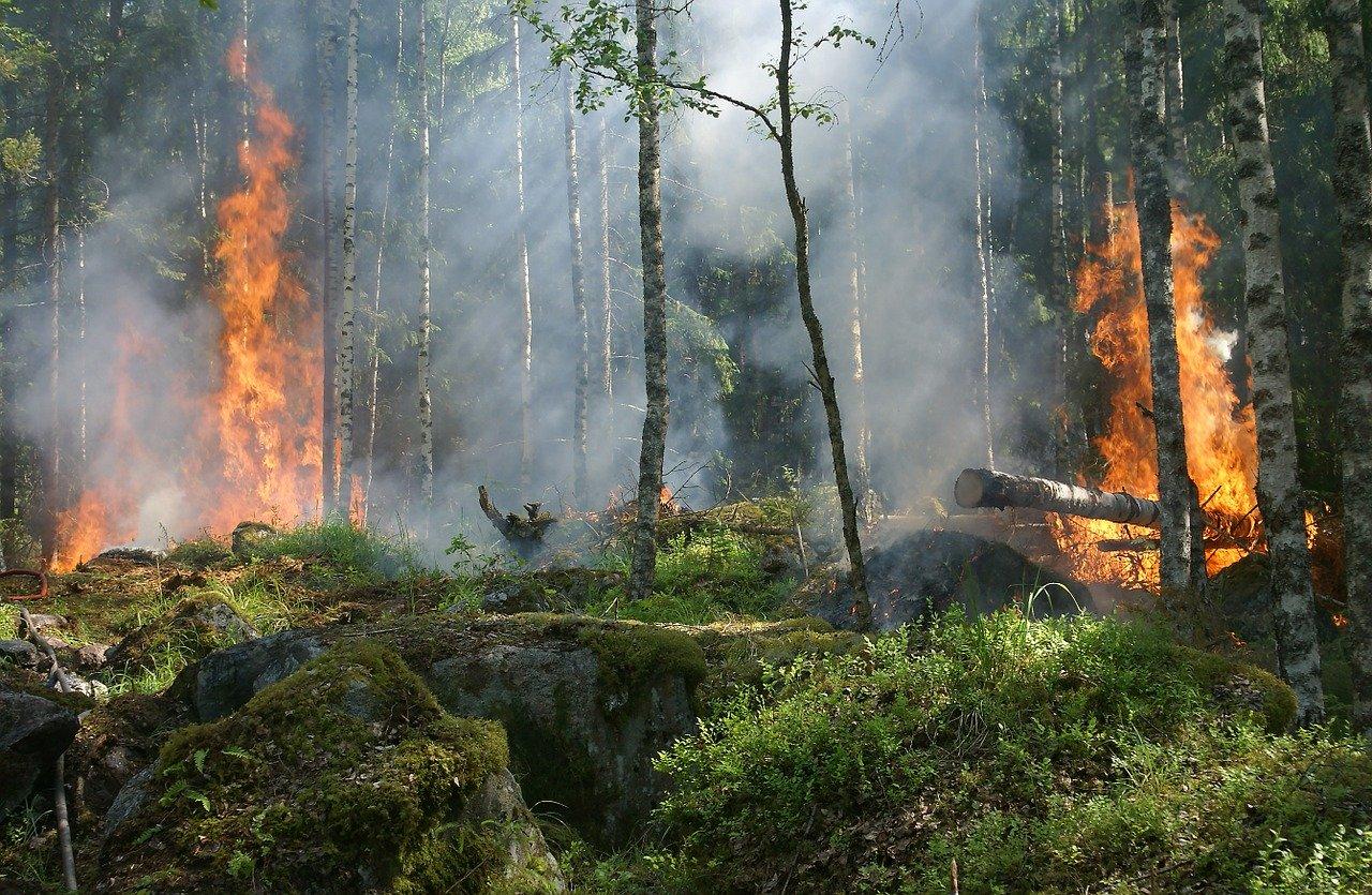 В Севастополе вводится особый противопожарный режим