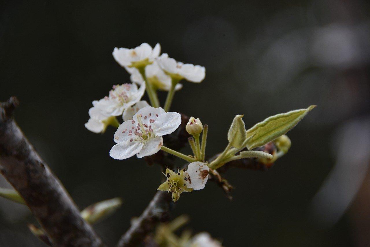 Ночные заморозки в Крыму сменятся дневным теплом (прогноз погоды на 9 – 11 апреля)