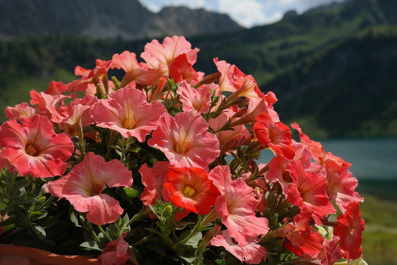 В Севастополе закупят цветы, которые обещали выращивать сами