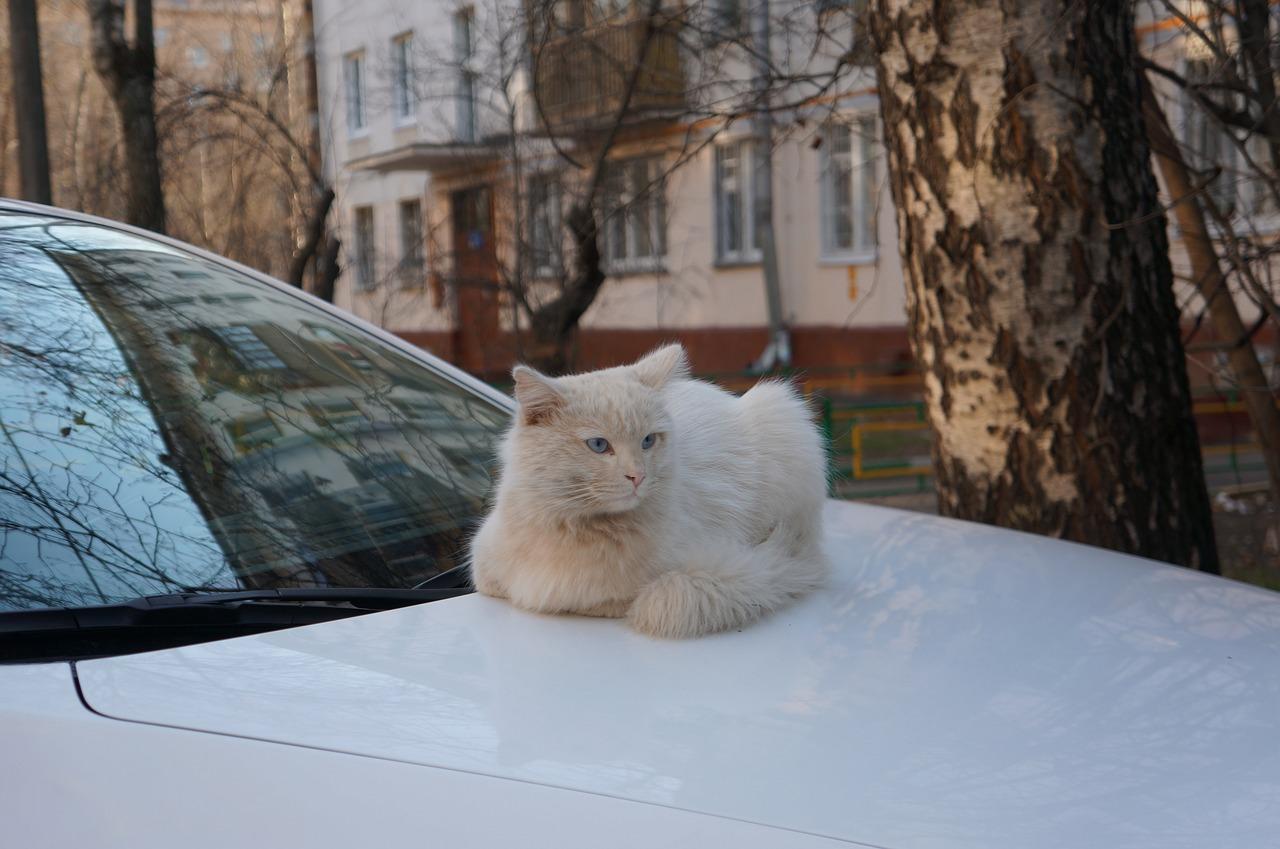Ехала с котом: Роспотребнадзор в Крыму разыскивает пассажирку такси