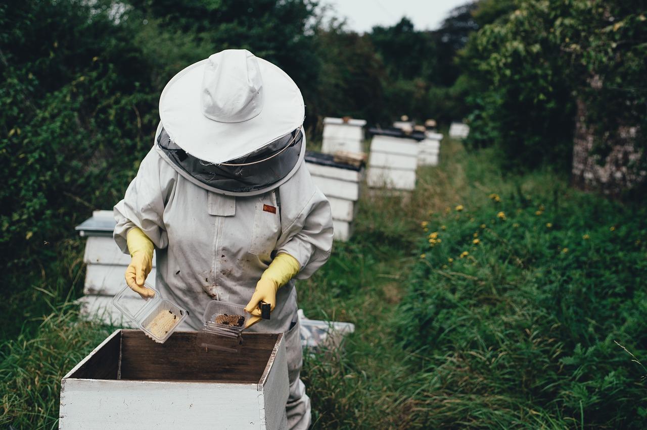 Севастопольские пчеловоды украли под Бахчисараем 30 ульев