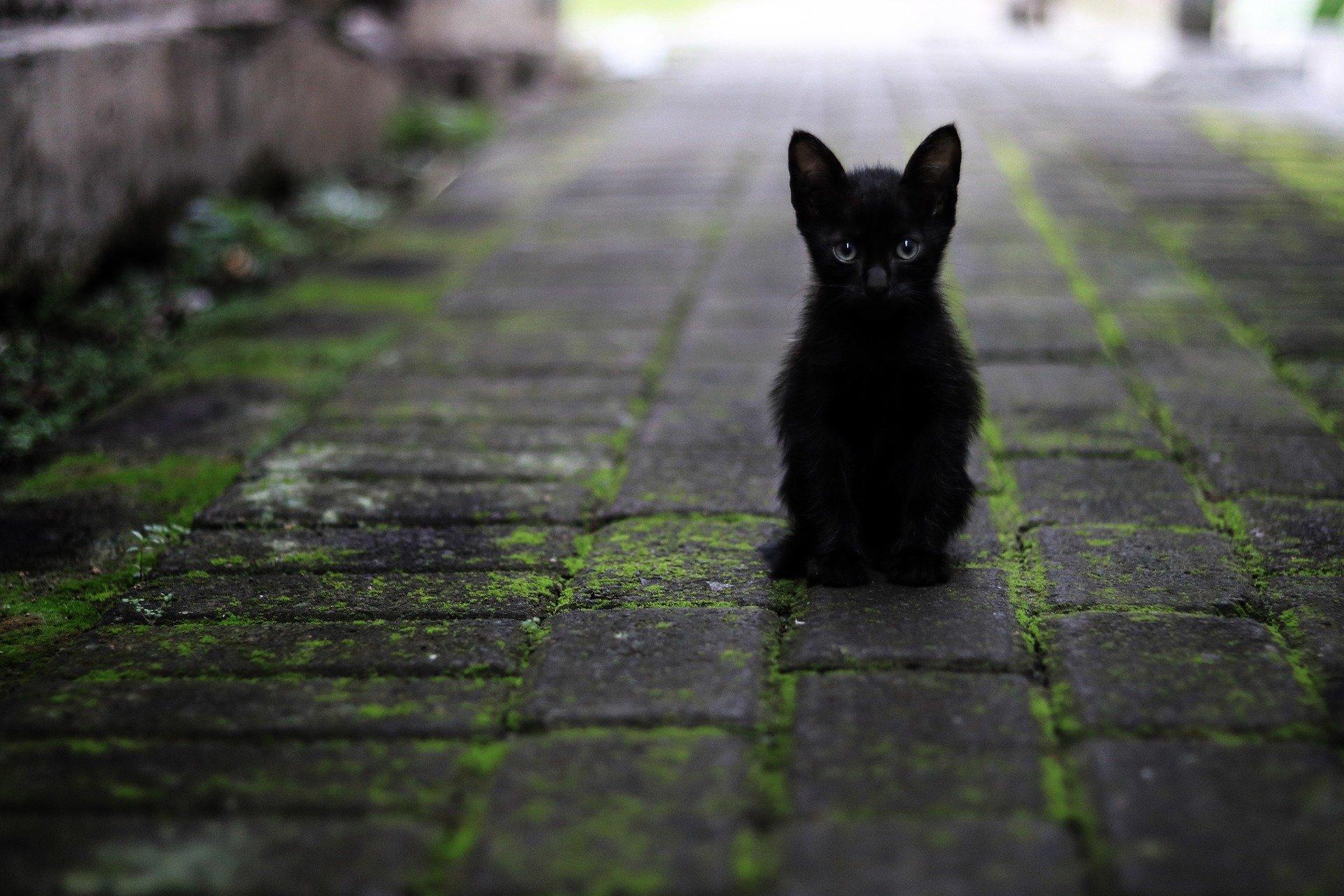 Из-за бешеной кошки на карантин закрыли целое село в Крыму