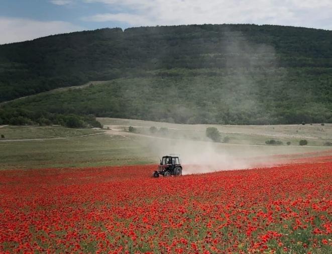 Маковое поле под Севастополем скосили трактором