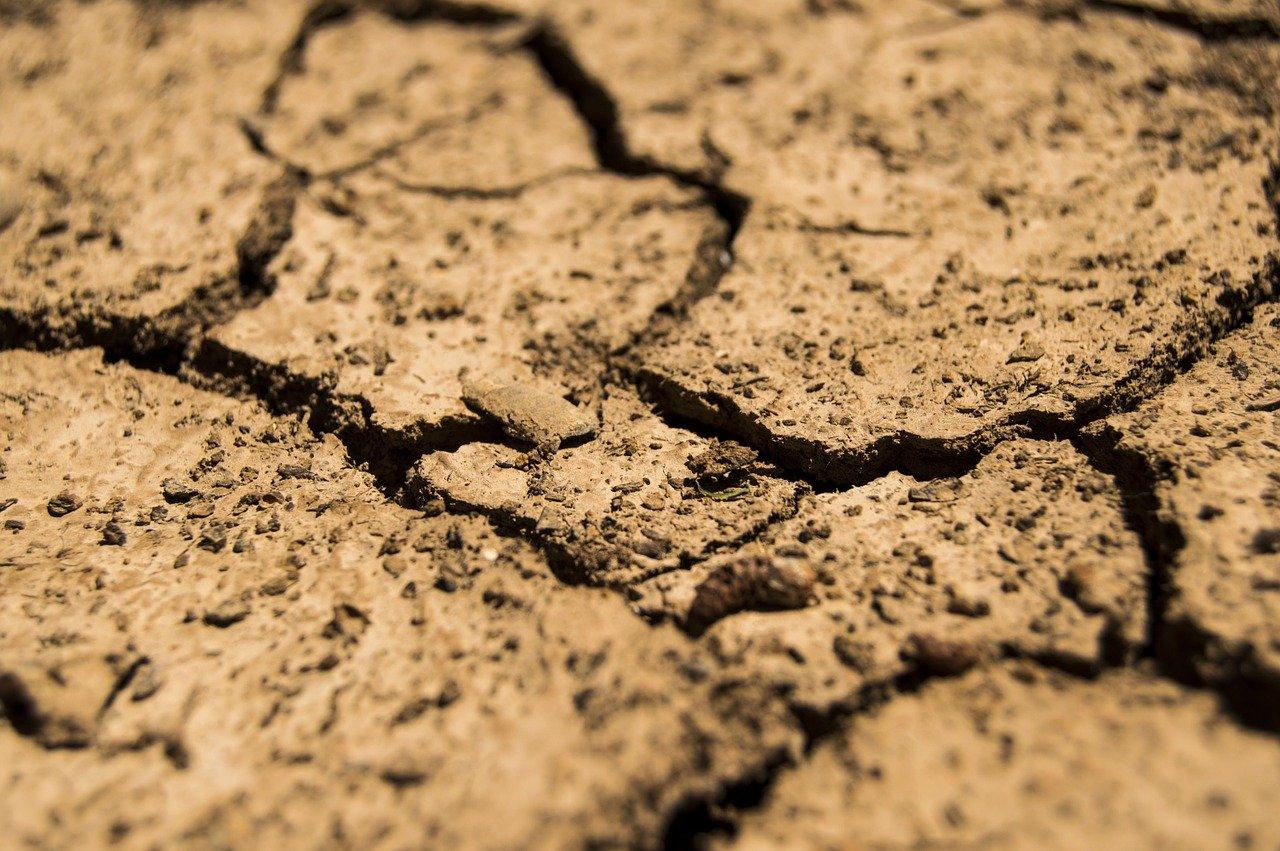 В Гидрометцентре сообщили, что ряду регионов России угрожает засуха