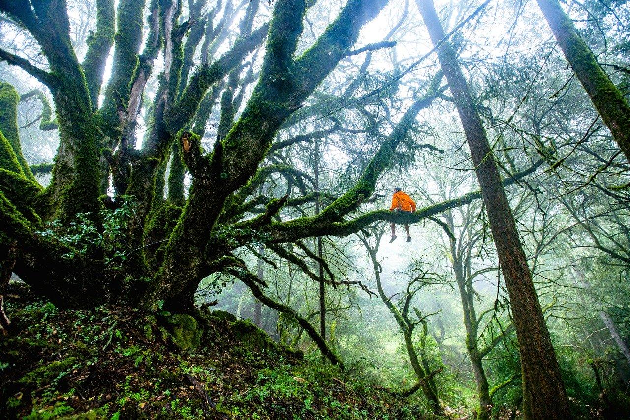 В Крыму снимали забравшегося на дерево мужчину