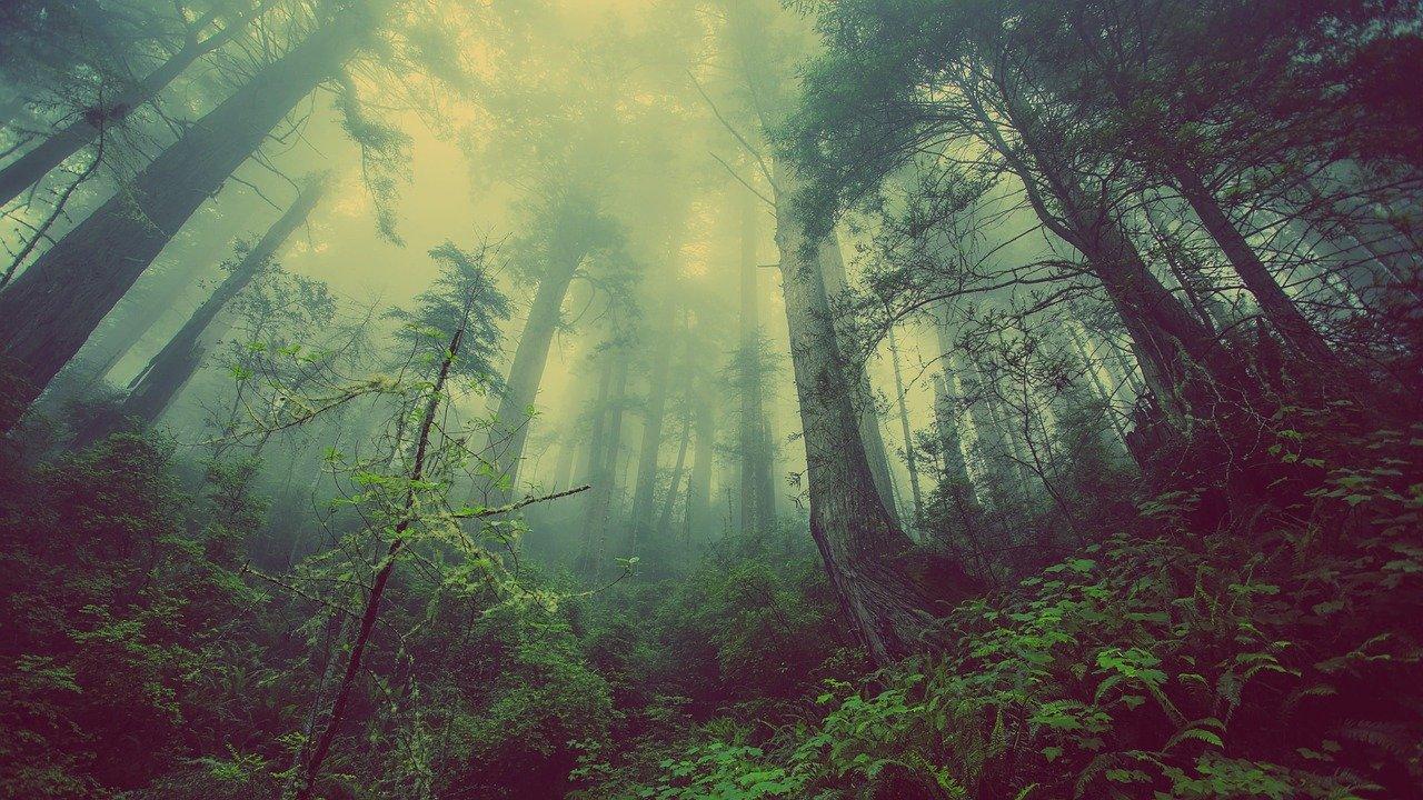 В севастопольском лесу заблудилась семья с ребенком