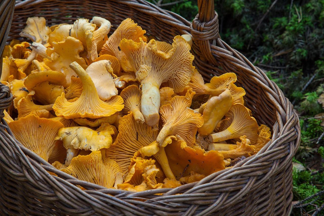 Российские ученые обнаружили лечебные свойства грибов